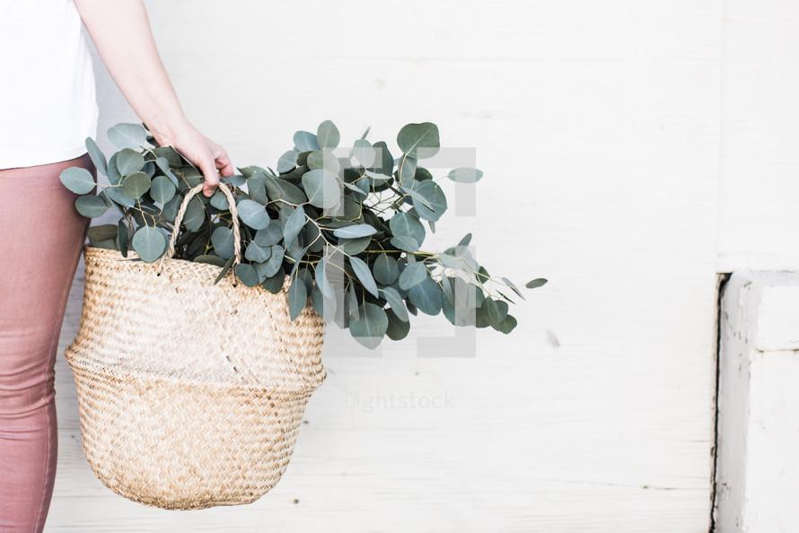 basket of eucalyptus
