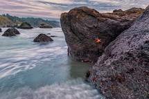 Trinidad Beach with starfish