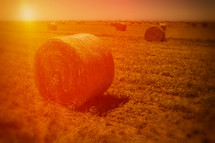 Hay bales in a field at sunset.