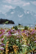 meadow of spring flowers and mountain view
