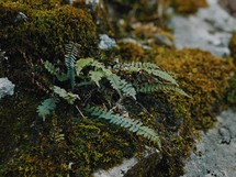 ferns and moss on the ground