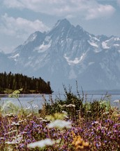 meadow of wildflowers and mountain view