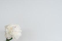 white flower on a white background