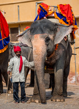 a man with an elephant in India