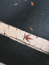 wet leaves on asphalt