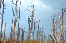 Katrina destruction broken trees