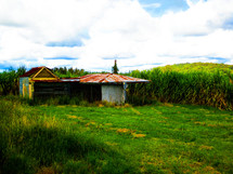 Cane field and country shack