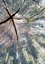 cross in a tree stump