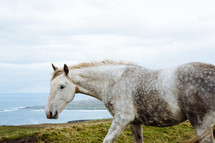 a horse walking along the Cliffs of Moher