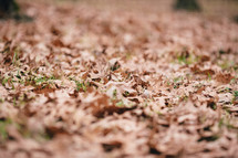 green grass under brown fall leaves
