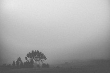Heavy fog covers a countryside.