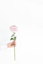 a woman holding a pink stemmed flower