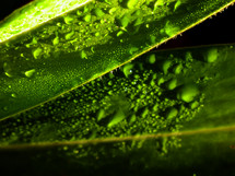 water on green leaves