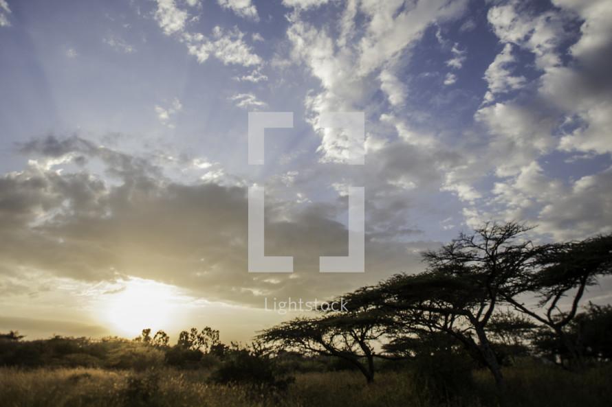 Ethiopian savanna