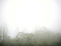 fog over a forest in Honduras