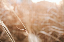brown grasses background