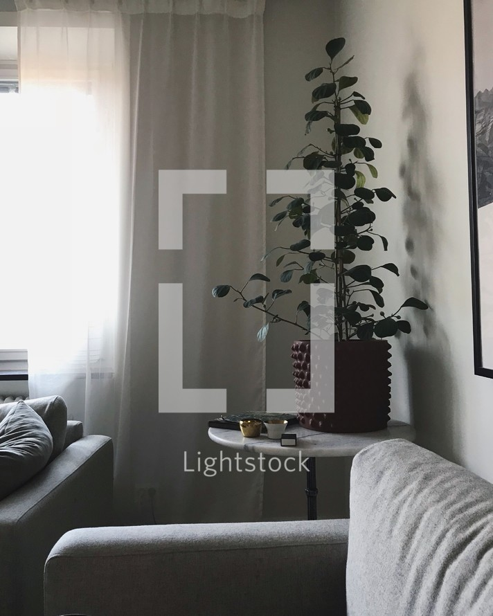 house plant in a corner of a living room