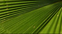 palm leaves in the breeze