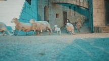 children running after sheep in biblical times