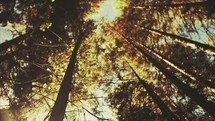 Looking up to the top of trees in a forest | Landscape | Slow Motion | Movement | Creation | Outdoors | Outside | Camp | Summer