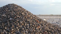 ants on an ant hill