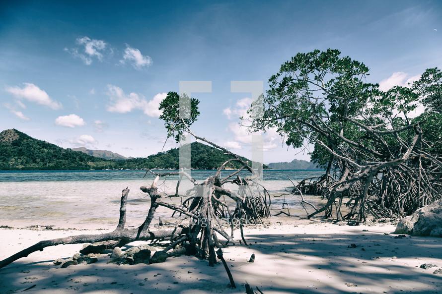 fallen trees on an island beach