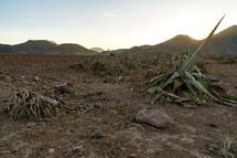 Andalusia cabo de gata desert in morning.