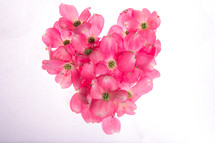 Pink Dogwood flowers arranged in a heart shape on a white background.