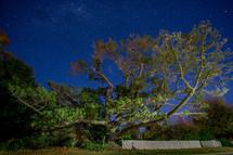 Sprawling tree under a moonlit sky.