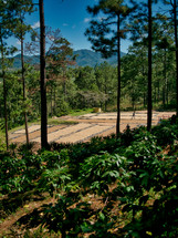 Coffee Farm Honduras - Coffee Drying Beds