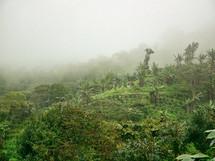 fog over a Coffee Farm in Honduras
