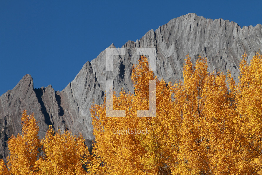autumn leaves in front of a mountain peak