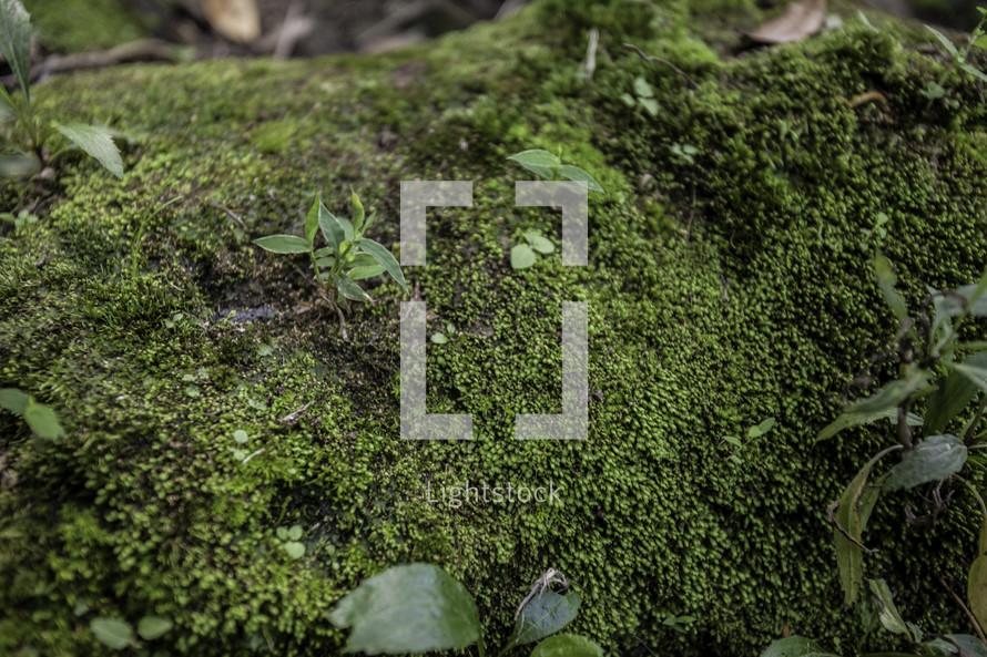 Moss patch