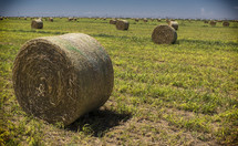 Bales of hay in a field.
