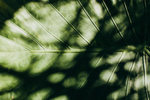 shadows on a tropical leaf