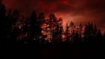 fireflies at sunset
