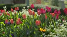 flower garden of tulips