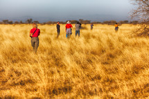 people walking through tall grass at a national park looking for animals