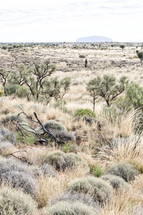 outback wilderness