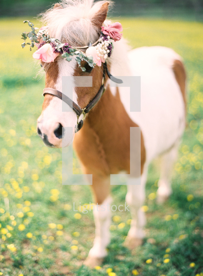 crown of flowers on a pony