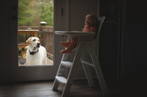 a dog watching an infant in a highchair