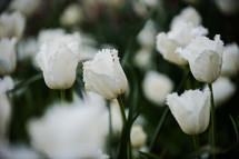 Blooming flowers.