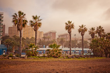 palm trees and buildings in Tenerife, Spain