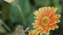 orange flowers in a garden
