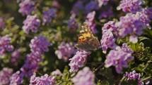 purple flowers in a garden and butterfly