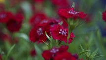 red flowers in a garden