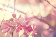 Spring sunshine beams through these delicate new blossoms