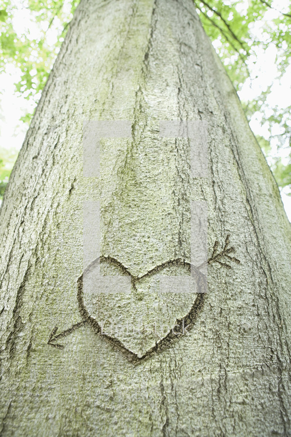 Close-up of an arrow and heart shape carved into the bark of a tree
