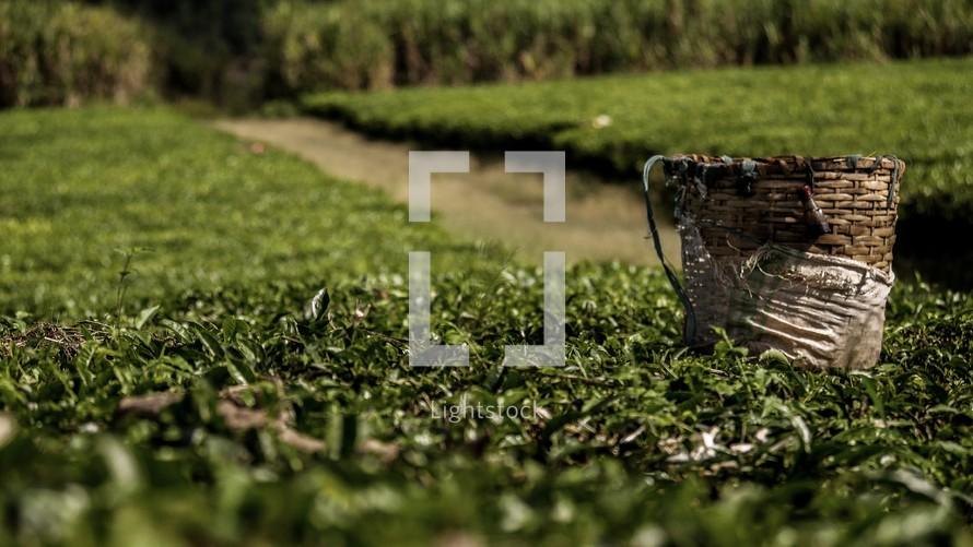 fields of crops in Uganda