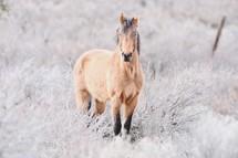 horse in a frosty field